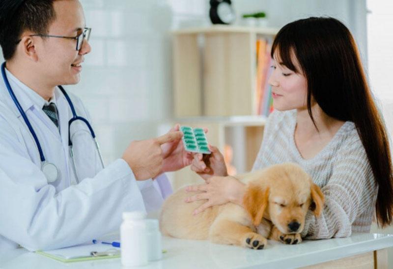 Vitaminas e suplementos para cachorro